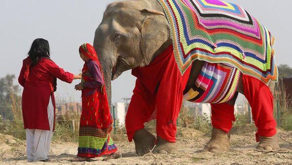 Hindistan'da filler kazakla dolaşıyor - Sputnik Türkiye