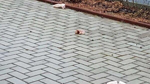 Bremerhaven'de camiye domuz parçaları atıldı - Sputnik Türkiye