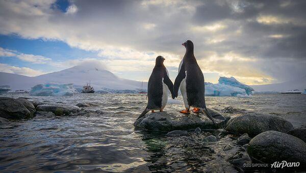 Antarktika'daki penguenler. - Sputnik Türkiye