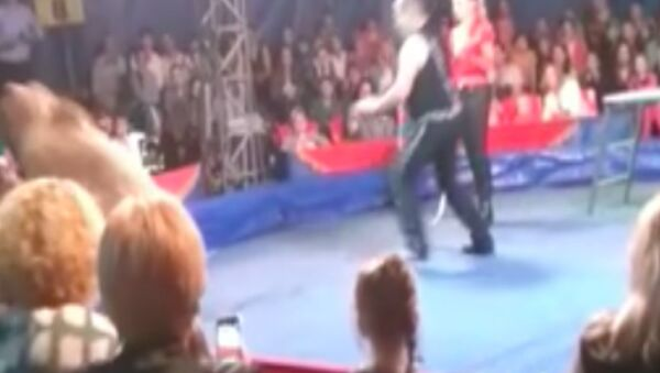 Ukrayna'da sirkte ayı vatandaşlara saldırdı - Sputnik Türkiye