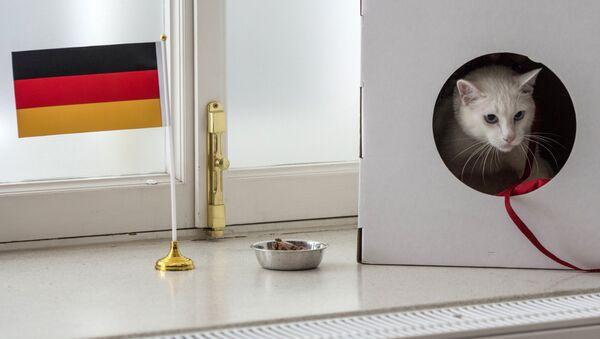 Rusya'nın ağırladığı Konfederasyonlar Kupası'nın kahin kedisi Aşil, turnuvanın şampiyonunu doğru tahmin etti. Almanya dün gerçekleşen final maçında Şili'yi 1-0 mağlup ederek şampiyonluğu elde etti. - Sputnik Türkiye