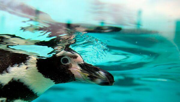 Hayvanat bahçesinde 'penguen katliamı' - Sputnik Türkiye