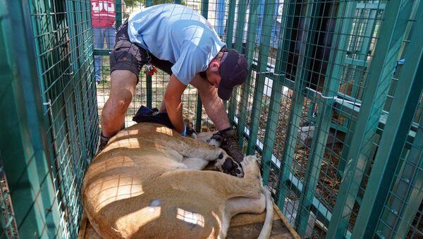 Halep Hayvanat Bahçesi'nden yaban hayvanlarının nakil işlemi tamamlandı - Sputnik Türkiye