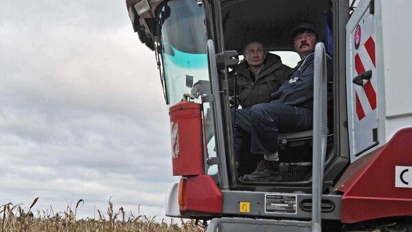Putin, Rodina tarım işletmesinde mısır toplama çalışmalarına katıldı. - Sputnik Türkiye