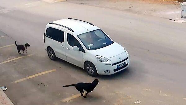 Antalya'da Erhan Kozan, köpeklerin üstüne aracını sürüp birinin başını ezerek öldürdü - Sputnik Türkiye