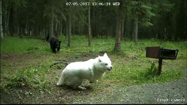 Köpeğine saldıran ayıyı korkuttu - Sputnik Türkiye