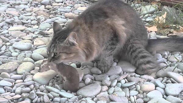 kedi-gelincik - Sputnik Türkiye