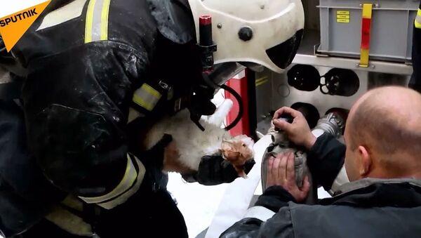 Yangından etkilenen kedi, kalp masajıyla hayata döndürüldü - Sputnik Türkiye
