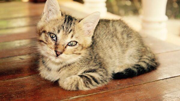 Rusya'da Kediler Günü kutlanıyor - Sputnik Türkiye