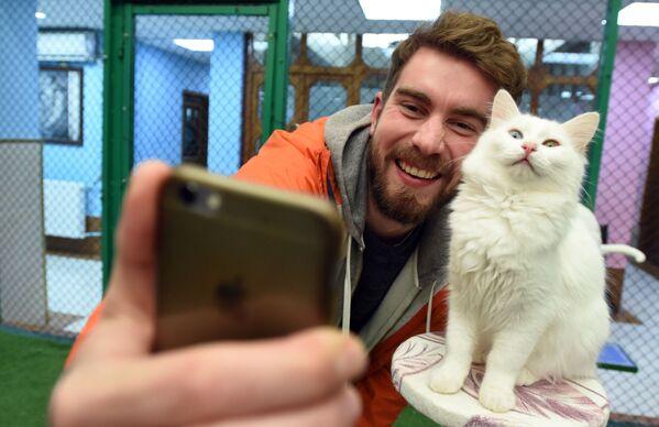 Yılın ilk yavru Van kedileri, dünyaya gözlerini açtı - Sputnik Türkiye