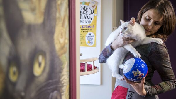 St. Petersburg'daki Ermitaj müzesinin 'kahin' kedisi Aşil - Sputnik Türkiye