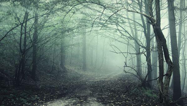 Dünyanın en gizemli ve olağanüstü ormanları - Sputnik Türkiye