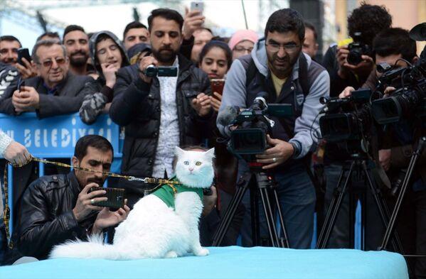 İpekyolu Belediyesi Shopping Fest alanında Büyükşehir Belediyesi desteğiyle düzenlenen yarışmada Van kendileri podyuma çıktı. - Sputnik Türkiye