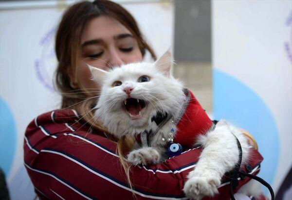Van'daki yarışmaya kedi severler ve kedi sahipleri büyük ilgi gösterdi. - Sputnik Türkiye