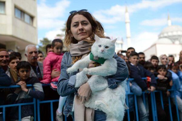 Yapılan oylamada 92 puan alan Sezar isimli kedi birinci seçildi. - Sputnik Türkiye