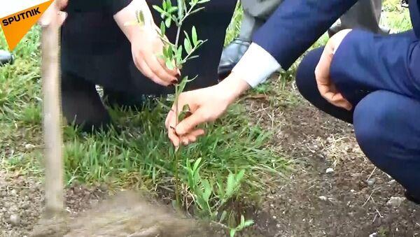 Lazkiye'de dostluk simgesi olarak Rusya'dan getirilen zeytin ağaçları dikildi - Sputnik Türkiye