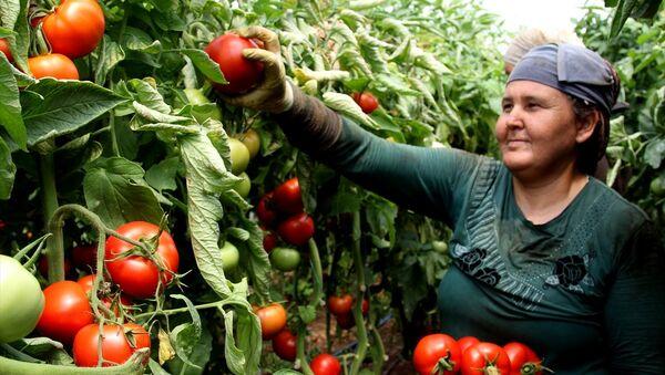 Rusya'nın kararı domates üreticilerini sevindirdi - Sputnik Türkiye