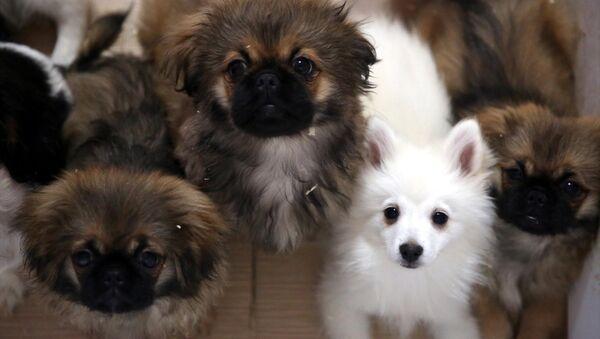 Kaçak yollardan getirilen köpekler ihaleyle satılacak - Sputnik Türkiye