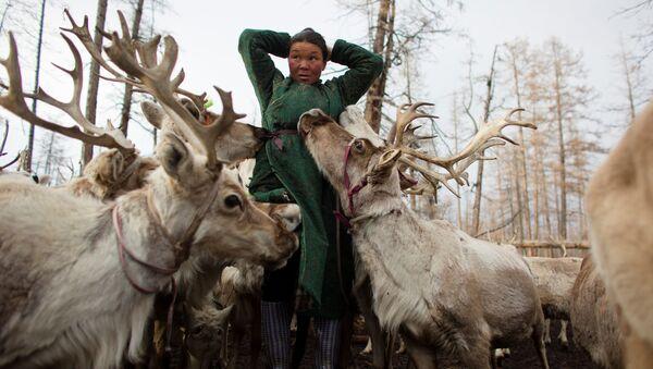 Moğolistan'da ren geyiği çobanları - Sputnik Türkiye