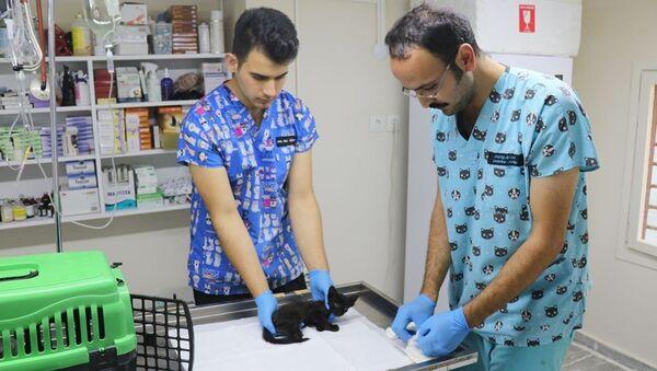 Yalova'da iki yavru kedi, ayakları kesilmiş halde bulundu - Sputnik Türkiye