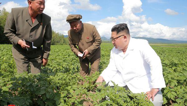 Kuzey Kore lideri Kim Jong-un, Samjiyon bölgesindeki Chunghung patates çiftliğini teftiş etti - Sputnik Türkiye