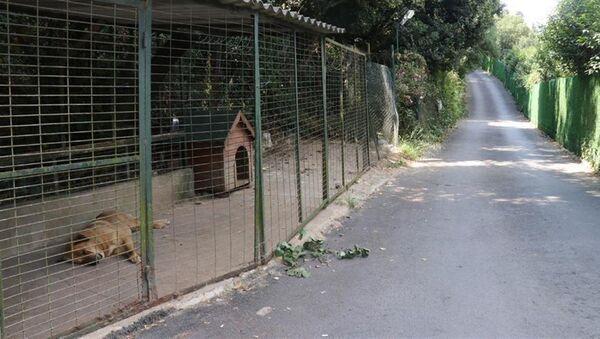 Adnan Oktar'ın bahçesindeki hayvanlar barınağa gönderildi - Sputnik Türkiye
