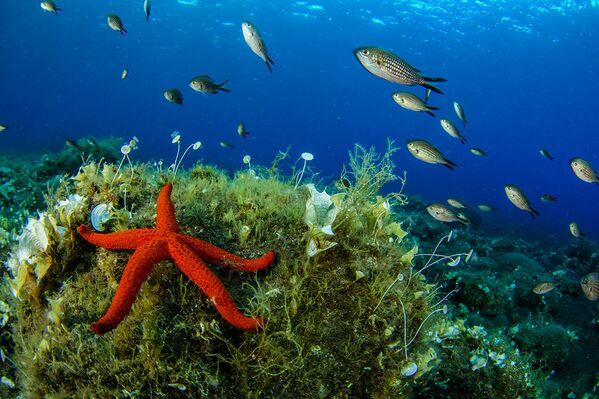 Aeolian Adaları'nın rengarenk sualtı dünyası - Sputnik Türkiye