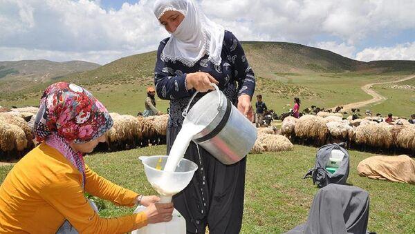 Süt, hayvancılık - Sputnik Türkiye