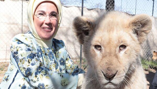 Emine Erdoğan yavru aslanla poz verdi - Sputnik Türkiye