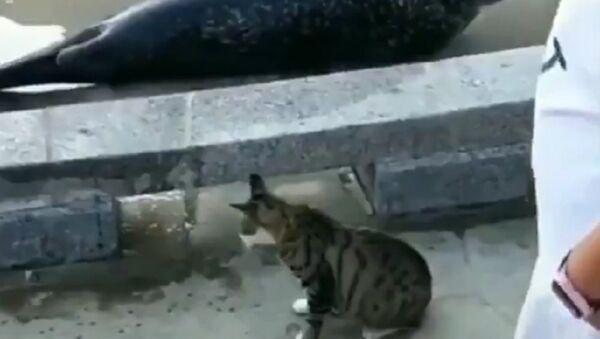 Kedi ve saldırıya uğrayan fok balığı - Sputnik Türkiye