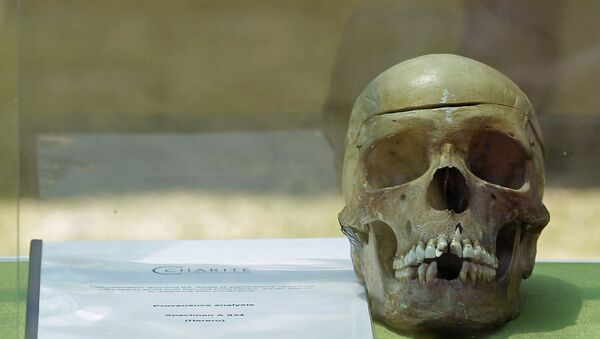 A skull from Germany on display in the city of Windhoek, Namibia, Tuesday, Oct 4, 2011. Hundreds of Namibians welcomed home the skulls of ancestors taken to Germany for racist experiments more than a century ago. The skulls are testimony to the horrors of colonialism and German cruelty against our people, Prime Minister Nahas Angula said at an airport ceremony, The Namibian nation accepts these mortal remains as a symbolic closure of a tragic chapter. - Sputnik Türkiye