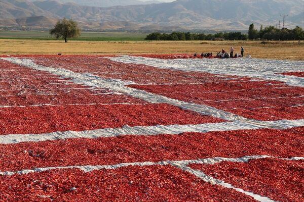 Elazığ'ın kurutulmuş domatesi Avrupa mutfağında - Sputnik Türkiye