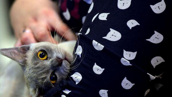 sahibi tarafından sevilen kedi - Sputnik Türkiye