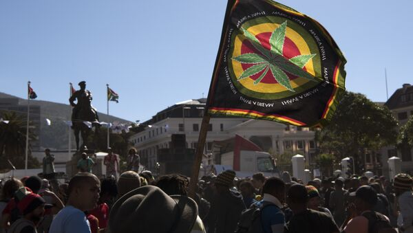 Cape Town'daki Güney Afrika Parlamentosu önünde esrarın yasallaştırılması için gösteri yapan eylemciler - Sputnik Türkiye
