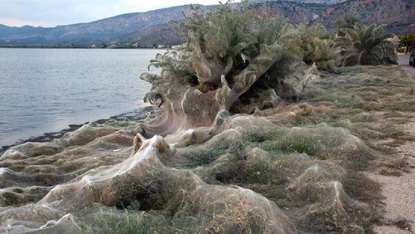 Yunanistan'da bir kasabada tüm sahil örümcek ağlarıyla kaplandı - Sputnik Türkiye