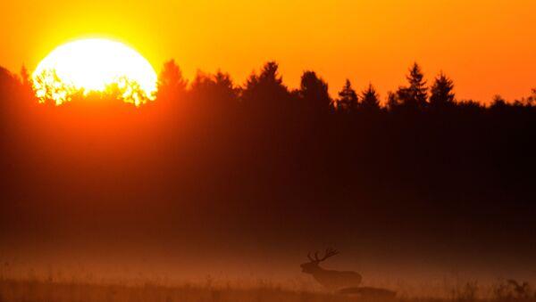 Belarus'ta sonbahar - Sputnik Türkiye