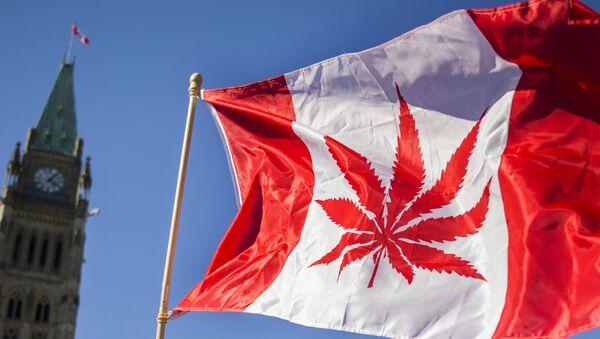 Kanada - Marihuana - Sputnik Türkiye