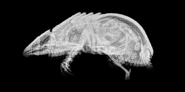 Hayvanların X-Ray Görüntüleri - Sputnik Türkiye