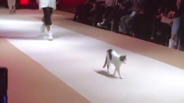 Podyumun tozunu attıran kedi, defileye damga vurdu - Sputnik Türkiye