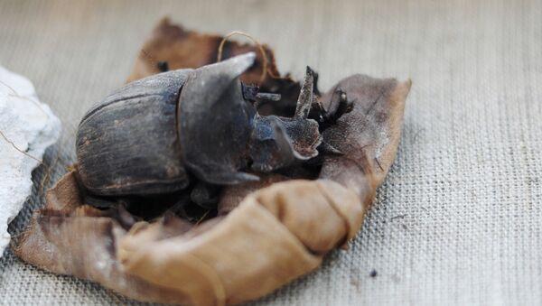 Antik Mısır'ın kutsal böceğinin mumyası bulundu - Sputnik Türkiye