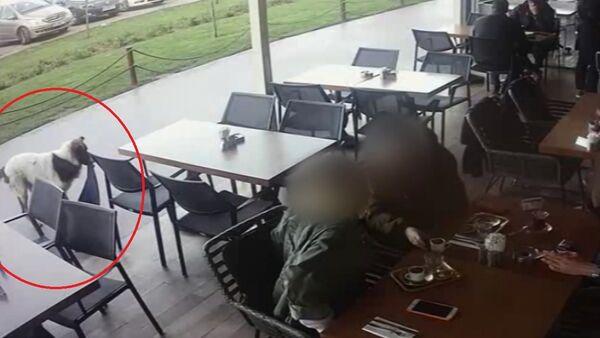 AVM'de tişört, şal ve triko çalan köpek güvenlik kameralarına yakalandı - Sputnik Türkiye