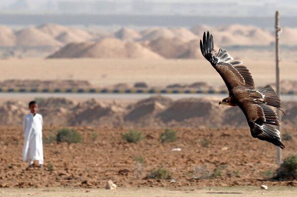 Mısır'da Dünya Doğancılık Günü kutlandı - Sputnik Türkiye