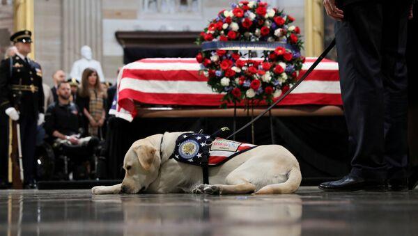ABD Kongresi'nin Capitol Hill binasının Rotunda bölümünde ziyaret edilen 41. Başkan George H.W. Bush'un naaşını rehber köpeği Sully son kez selamlamaya geldi. - Sputnik Türkiye