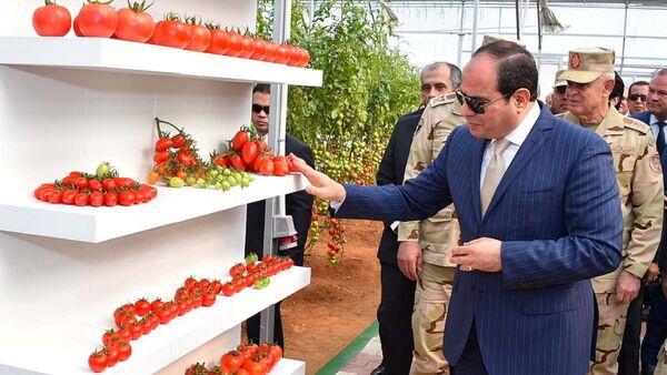 Mısır çapında 400 bin dönüm araziyi seraya dönüştürme projesi başlatan Sisi, bu kapsamda ordunun Kahire'nin kuzeydoğusundaki 10 Ramazan Şehri'nde yer alan bir tarım projesinin açılış törenine katıldı. - Sputnik Türkiye