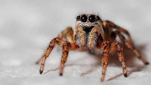 Örümcek - Sputnik Türkiye