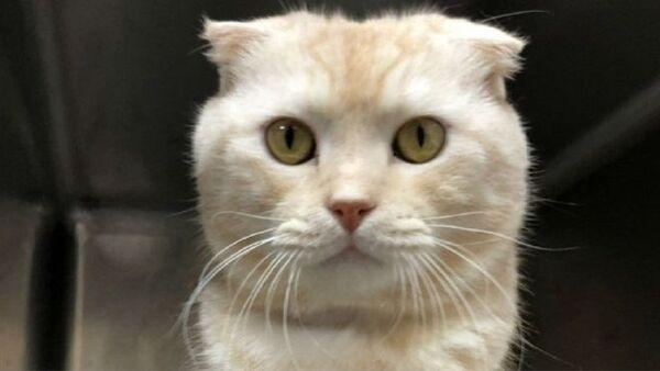 Tayvan'da kedisini kargoyla barınağa yollayan kişiye 90 bin dolar ceza - Sputnik Türkiye