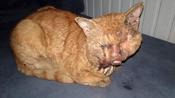 Antalya'da kediye işkence: Naylonu eritip gözlerine damlattılar - Sputnik Türkiye