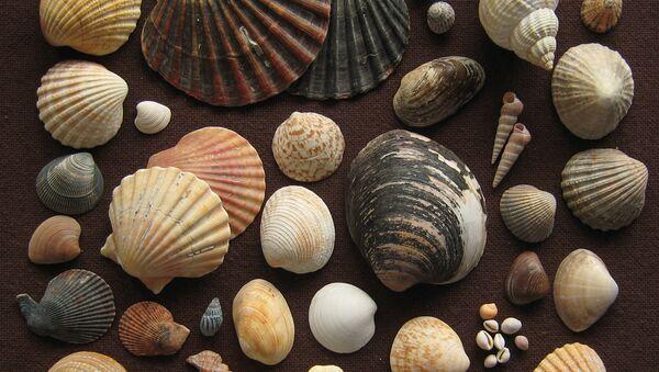 Deniz kabuğu koleksiyonunda 460 milyon yıllık fosil bulundu - Sputnik Türkiye