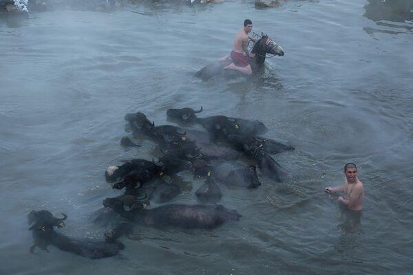Dondurucu soğukta atlarıyla suya giren köylüler - Sputnik Türkiye