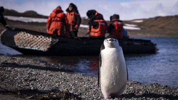 Penguen -  Antarktika - Sputnik Türkiye